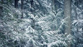 Snowy Trees In Blizzard stock footage