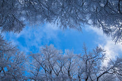 Snowy trees and blue sky background Stock Photos