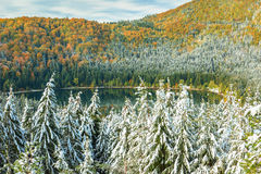 Snowy trees and colorful autumn landscape,St Anna lake,Romania Stock Photos