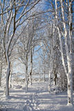 Snowy trees in countryside royalty free stock photos