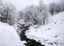 Snowy trees with creek in the winter Royalty Free Stock Images