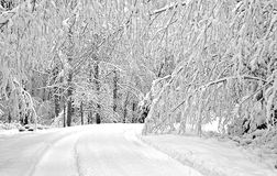 Snowy trees and curved road Stock Photos