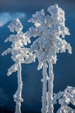 Snowy trees. stock photos