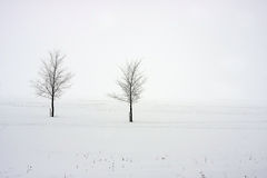 Snowy trees in a field Royalty Free Stock Photo