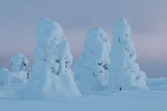 Snowy trees in Finnish Lapland. Snowy hilltop in Finnsih Lapland with some tykky trees in Riisitunturi National Park Stock Images