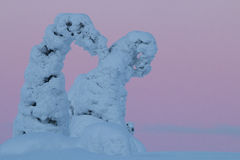 Snowy trees in Finnish Lapland Stock Photography