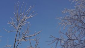 Snowy trees in forest stock footage