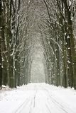 Snowy trees in the forest in the Netherlands Royalty Free Stock Photos