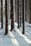 Snowy trees in forest Royalty Free Stock Image