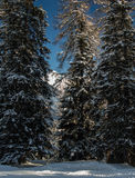 Snowy trees in front of majestic panorama Stock Images