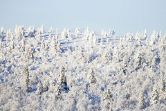 Snowy trees on a hillside. On sunny day royalty free stock photography