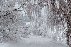Snowy Trees In Winter Landscape And Rural Road Stock Photo