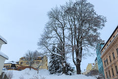 Snowy trees. January 16, 2017 Jablonec nad Nisou, Czech Republic view of snow covered trees between the houses on the street Royalty Free Stock Image
