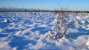 Snowy  trees, Lithuania Royalty Free Stock Photos