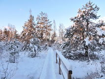 Snowy  trees, Lithuania Stock Image
