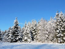 Snowy  trees, Lithuania Stock Photos
