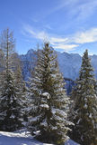 Snowy Trees on Monte Lussari Stock Images