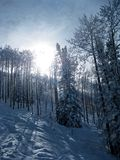 Snowy Trees 2. More snowy trees on a ski trail in Steamboat Springs, Colorado royalty free stock image