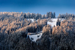 Snowy Trees in morning light. In Austria during a cold winters morning Royalty Free Stock Photography