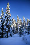 Snowy trees in mountain Stock Images