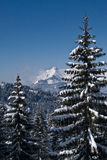 Snowy trees and mountains Stock Images