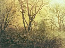Snowy trees in murky yellow light. Urban winter Stock Photography