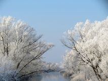 Snowy trees near chanel, Lithuania Royalty Free Stock Images
