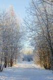 Snowy trees next to a snowy footpath Royalty Free Stock Photography