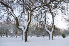 Snowy trees in park Royalty Free Stock Images
