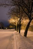 Snowy Trees in a Row in the Park- Winter Theme Stock Image