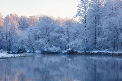Snowy trees in sunlight surrounding lake surface. Winter scenery royalty free stock image