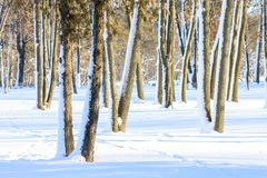 Snowy trees at sunny winter day Royalty Free Stock Photos