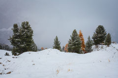 Snowy trees under first snow in Italian Dolomites Stock Images