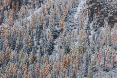 Snowy trees under first snow in Italian Dolomites Royalty Free Stock Photos