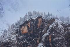Snowy trees under first snow in Italian Dolomites Stock Photography