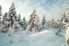 Snowy trees in winter Stock Photography