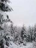 Snowy trees Royalty Free Stock Photos