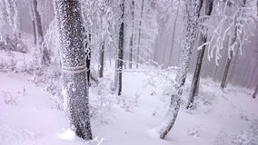 Snowy trees in winter Stock Photos