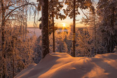 Snowy trees in winter forest Stock Image