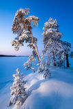 Snowy trees in winter forest Stock Images