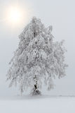 Snowy trees in winter landscape Royalty Free Stock Photo