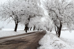 Snowy trees in winter landscape Royalty Free Stock Photos