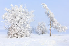 Snowy trees in winter landscape and rural road. Nice winter landscape with trees covered by snow, sunny day and trees with hoarfrostand icing Royalty Free Stock Photo