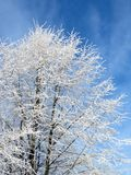 Snowy trees in winter, Lithuania Royalty Free Stock Photography