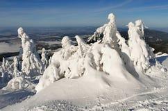 Snowy trees of a winter mountain. Amazing snowy trees of a winter mountain. Czech republic royalty free stock photos