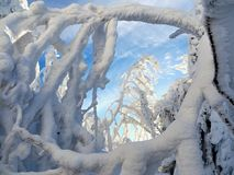 Snowy trees of a winter mountain stock photography