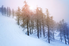 Snowy trees on winter mountains in the evening Royalty Free Stock Photos