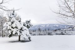 Snowy Trees in The Winter Park. Beautiful Winter mountain landscape - South Park in Sofia, Bulgaria ,tree with snow Stock Photography