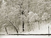 Snowy Trees in Winter in Sepia. Fresh snowfall Royalty Free Stock Photos
