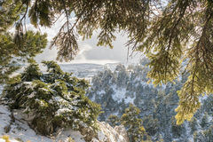 Snowy trees in winter. View from mountain Parnitha in Greece. Stock Photo